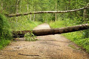 un albero caduto che blocca una strada di montagna a simboleggiare gli ostacoli che alcune persone trovano davanti a sé.