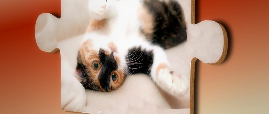 un pezzo di puzzle con la fotografia di un gatto